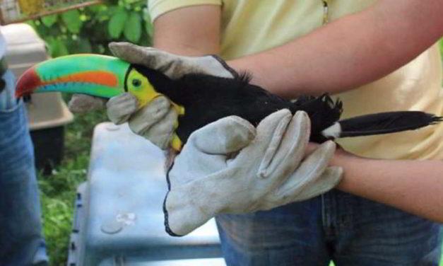 Animales silvestres en Colombia volvieron a su hábitat