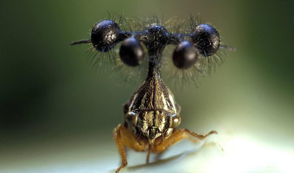 Los 16 insectos más sorprendentes del mundo