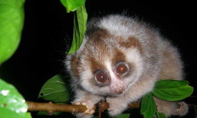 8 animales tiernos que podrían ser mortales